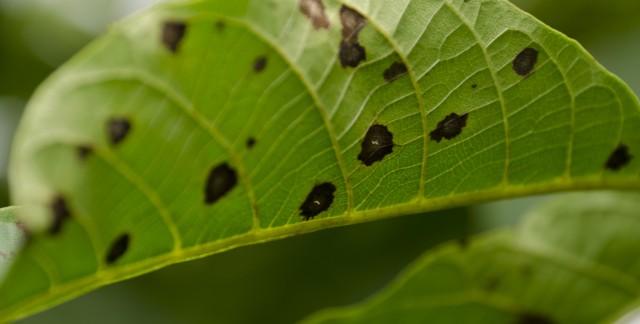 Les maladies communes qui s'attaquent à vos arbres