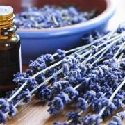 Les lavandes délicates : des plantes médicinales aussi belles que capricieuses
