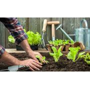 Transplantation de plantes : 3 trucs de pro à savoir