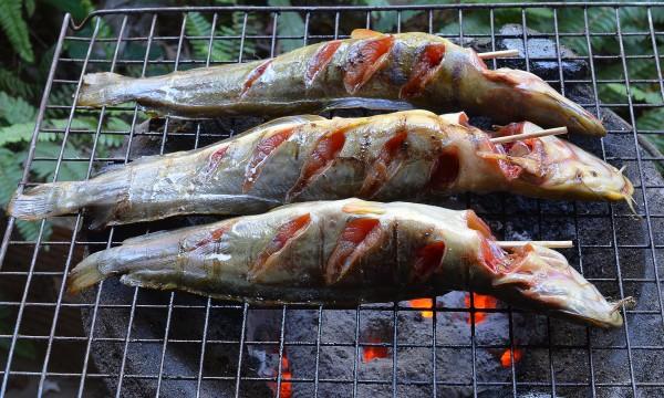 Filets de silure cajun trucs pratiques for Poisson les plus cuisiner