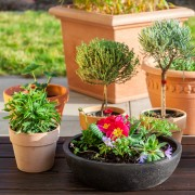 Jardin en pot : 5 réponses essentielles