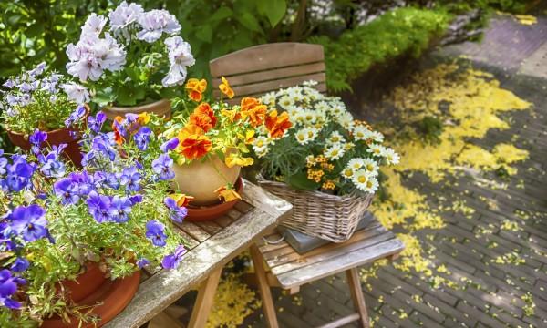quelle plante mettre dans un grand pot exterieur finest joli cachepot cherche belle plante with. Black Bedroom Furniture Sets. Home Design Ideas