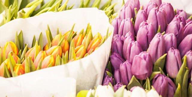 Le guide parfait du jardinier pour de belles plantes et de belles fleurs