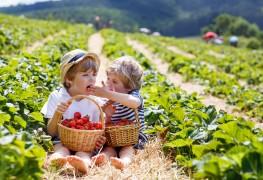 Trucs faciles pour rendre la cueillette de petits fruits amusante pour les enfants