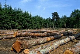 Comment prendre soin de vos arbres