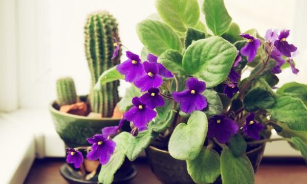 """Résultat de recherche d'images pour """"violette fleur"""""""