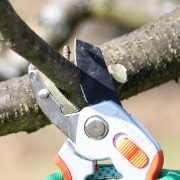 Matériel et outils indispensables pour l'entretien des arbres