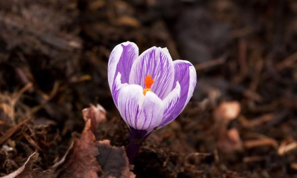Conseils de jardinage sensationnels avec le paillis for Jardinage conseil