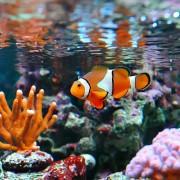 Bien entretenir votre aquarium