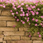 8 conseils utiles à la construction d'un mur de jardin