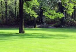 7 astuces pour prendre soin des arbres dans votre jardin