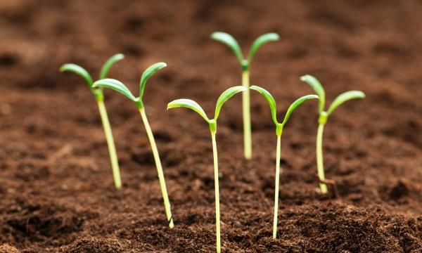 7 fa ons de prot ger vos semis contre le gel printanier trucs pratiques - Comment proteger les arbres fruitiers du gel ...