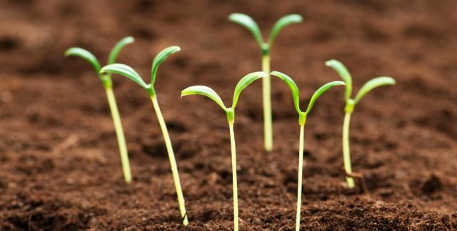7 façons de protéger vos semis contre le gel printanier