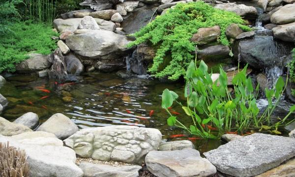 Construire un bassin de jardin magnifique en 4 étapes faciles ...