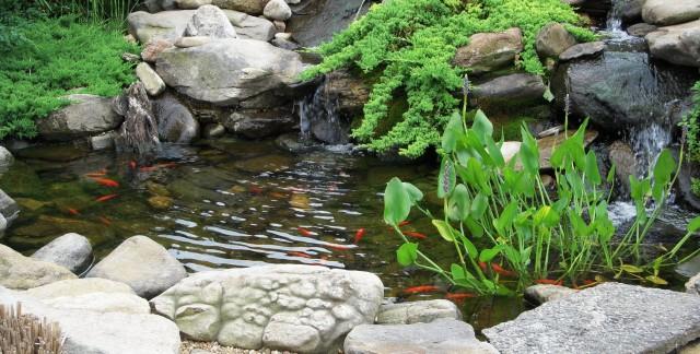 L'utilisation de plantes pour filtrer votre piscine naturelle