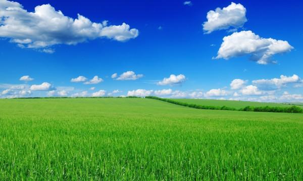 Comment choisir la bonne herbe pour une pelouse sans souci trucs pratiques - Different type de gazon ...