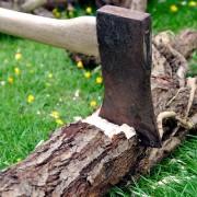 Abattre un arbre : ne jouez pas à l'apprenti bûcheron