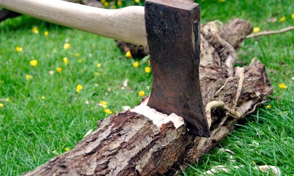 abattre un arbre ne jouez pas l 39 apprenti b cheron trucs pratiques. Black Bedroom Furniture Sets. Home Design Ideas
