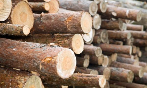 comment transformer vos arbres en bois d 39 uvre trucs pratiques. Black Bedroom Furniture Sets. Home Design Ideas