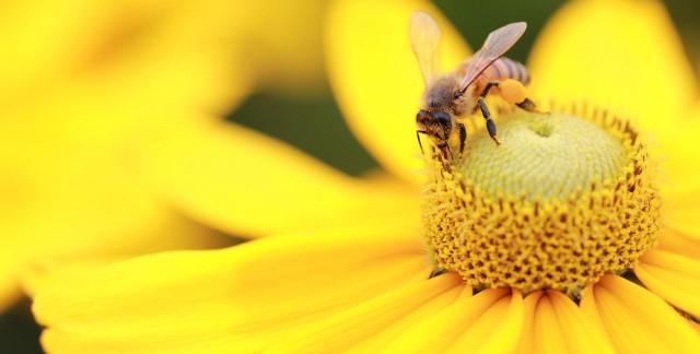 Associer les plantes et les insectes : 3 notions fondamentales