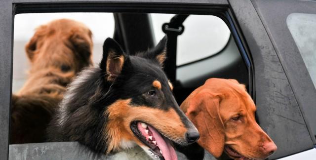 Comment déménager ces animaux de compagnie sans soucis