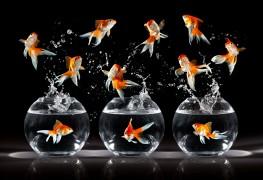 Conseils pour prendre soin de votre poisson rouge