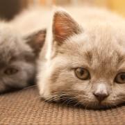 De simples jouets faits maison pour chats