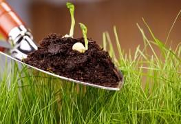 Jardinage écologique:faire pousser des herbes aromatiques