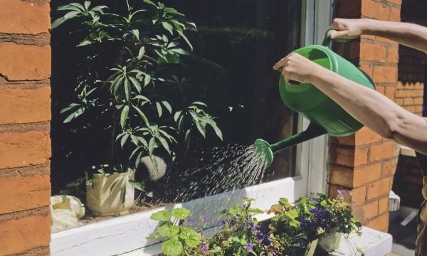 9 id es pour prot ger vos plantes de la s cheresse trucs. Black Bedroom Furniture Sets. Home Design Ideas