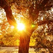 9 conseils pour choisir le bon arbre pour votre jardin