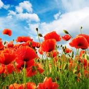 Conseils pour jardinerdans les climats chauds