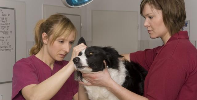 Des armes contre 4 parasites qui attaquent vos chats et vos chiens