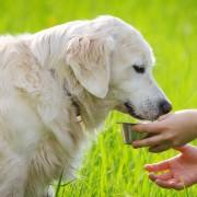 Alimentation saine et équilibrée pour animaux de compagnie