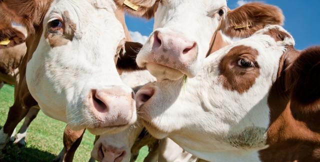 Propreté et assainissement pour le bétail