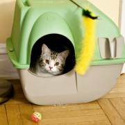 Conseils pour choisir les accessoires de vos animaux de compagnie