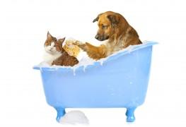 Un guide rapide pour pratiquer le shampoing et le massagesur les animaux