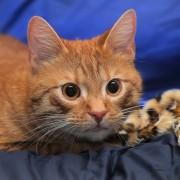 Ce que vous devez savoir sur la stérilisation de votre chat