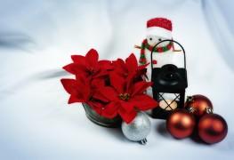 Guide d'achat de fleurs de Noël pour célébrer le temps des Fêtes