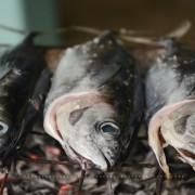 Comment cuisiner des poissons fraîchement pêchés