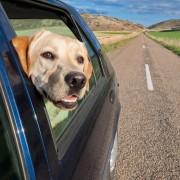 Conseils pour voyager avec votre animal sans soucis