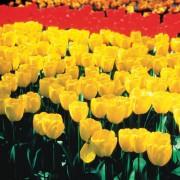 Les fleurs du printemps s'invitent chez votre fleuriste