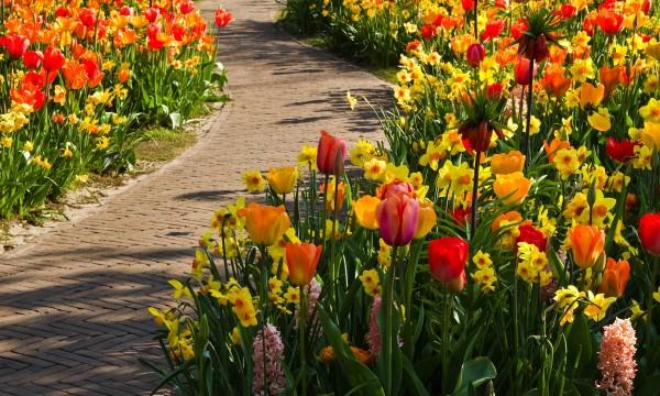 5 conseils pour planter des bulbes de fleurs trucs pratiques. Black Bedroom Furniture Sets. Home Design Ideas