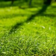 12 conseils pour réensemencer et replanter une pelouse