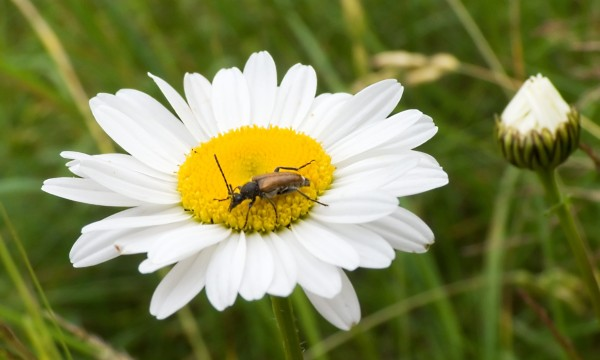 Comment vous d barrasser des vers blancs dans votre pelouse trucs pratiques - Comment se debarrasser des vers blancs ...