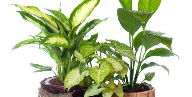 L'eau du robinet nuit-t-elleà vos plantes?