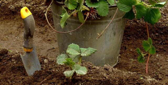 Des nutriments pour un jardin plus vert