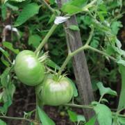 Le bon support : 5 choses à savoir sur le piquetage des plantes