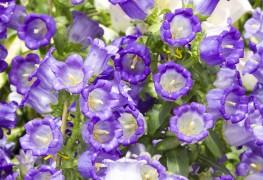 5 conseils pour ajouter des bisannuelles dans votre jardin