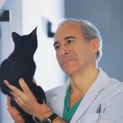 Les avantages et les inconvénients de la castration du chat