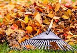 9 idées ingénieuses pour utiliser les feuilles d'automne